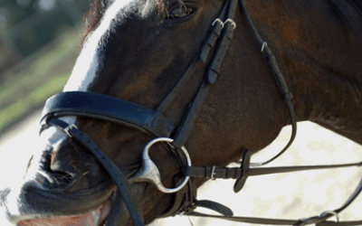 Need to Market your equestrian business but don't know where to start?