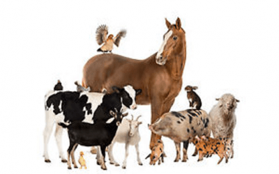 Equestrian Farm Diversification – the Opportunity