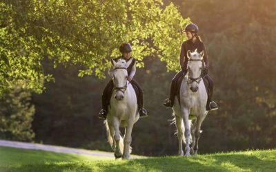 Equestrian business enquiries